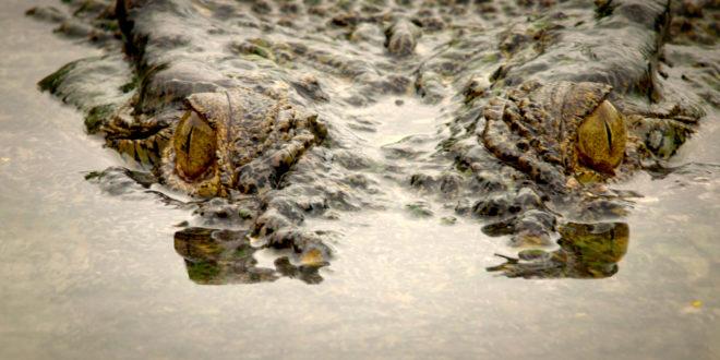 Smrtonosni Australci na Viasat Nature kanalu